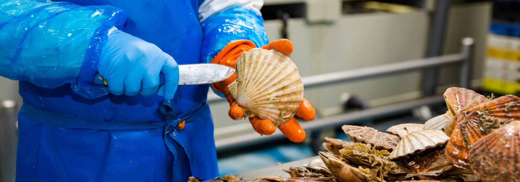 coquille st jacques Rouen Marée et Manche Marée fournisseur de produits de la mer