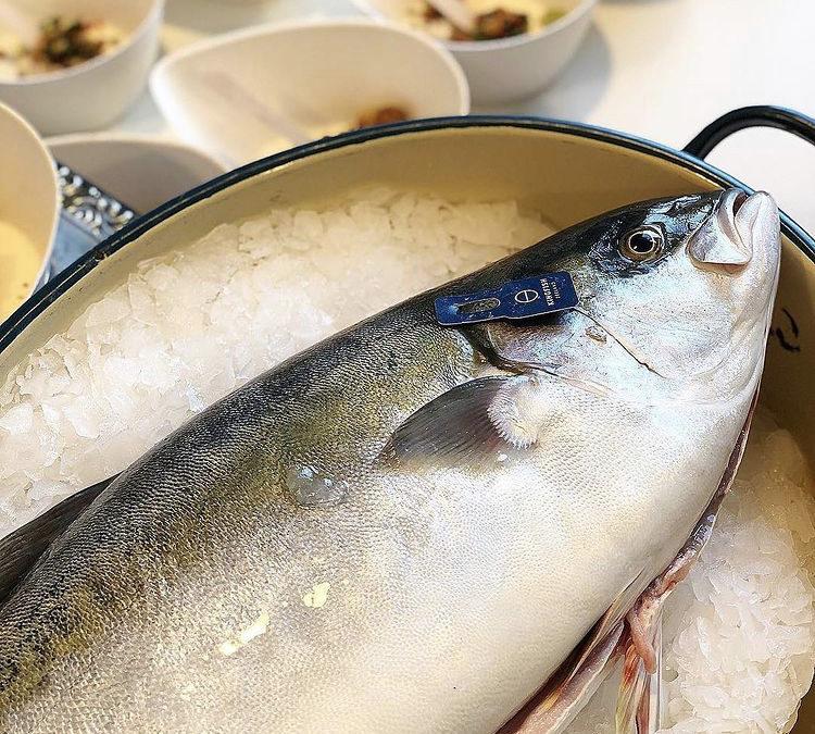 Kingfish en exclusivité chez Manche Marée & Rouen Marée.